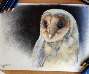 owl, animal, and drawing image