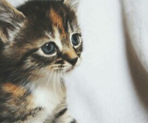 cat, cute, and ♥ image