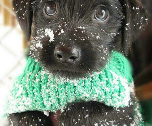 dog, winter, and cute image
