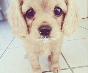 dog, ♥, and cute image