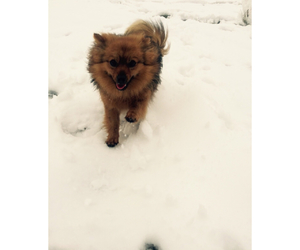 december, dog, and snow image