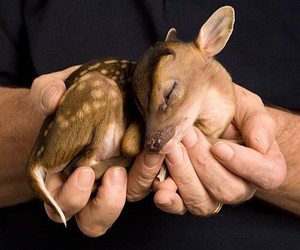animal, bambi, and snuggle image
