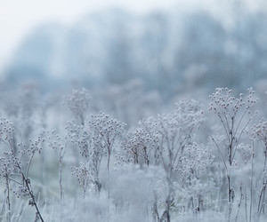 flowers, frost, and landscape image