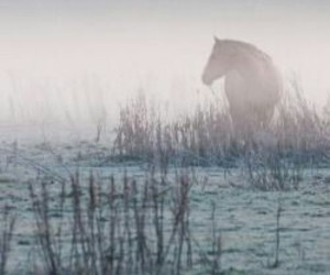 horse, morning, and mist image