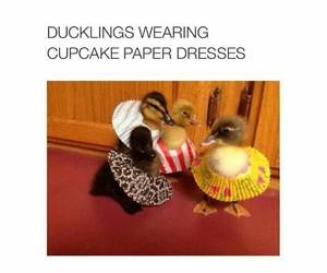 cute, animal, and dress image