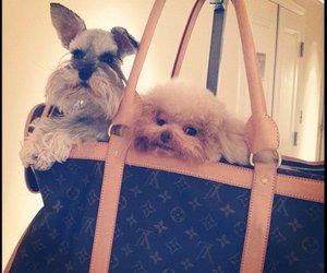 bag, Louis Vuitton, and dog image