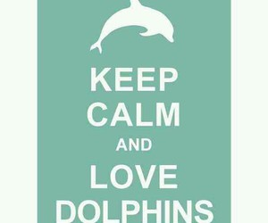 animals, keep calm, and love dolphins image