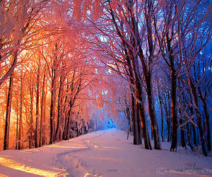 nature, nice, and winter image