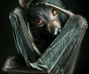 animal, bat, and black image