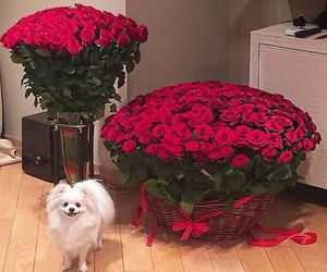 rose, flowers, and dog image