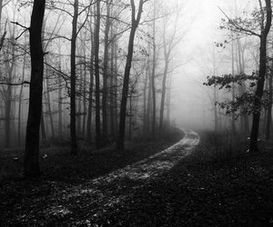 black and white, path, and Darkness image