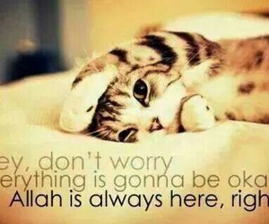 allah, cat, and happy image