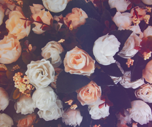 photography, pretty, and roses image