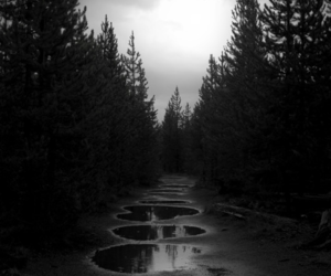black and white, nature, and dark image