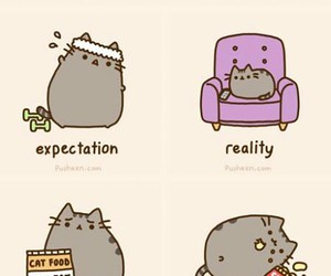 cat, new year, and new year's resolutions image