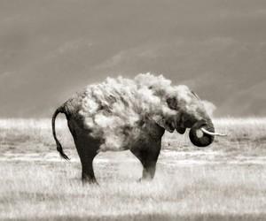 bath, dust, and elephant image