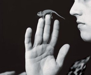 black and white, boy, and lizard image