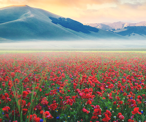 flowers, nature, and landscape image