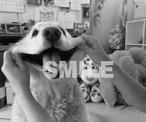 black and white, dog, and funny image