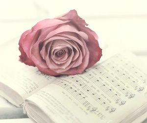 pink, rose, and music image