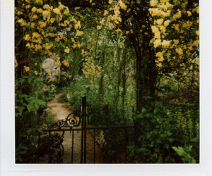 garden, gate, and flowers image