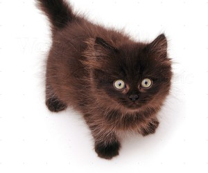 baby animals, cats, and chocolate image