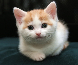 baby animals, cats, and kitten image