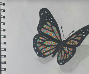 art, butterfly, and colorful butterfly image