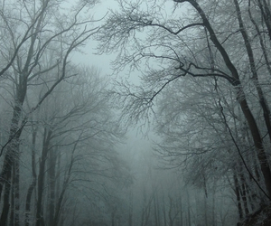 cold, like, and trees image