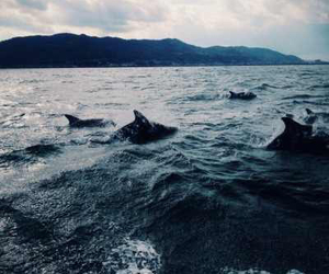 sea, ocean, and dolphin image