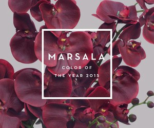 marsala, 2015, and color image