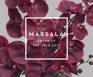 new year, 2014, and marsala image