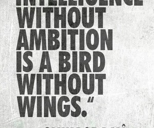 intelligence, quotes, and ambition image