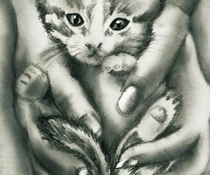 cat, draw, and lovely image