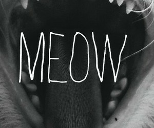 black&white, meow, and cat image