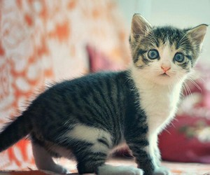 cat, little, and cute image