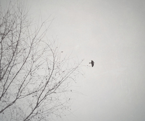 Flying, tree, and explored image