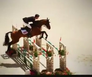 horses, riding, and show jumping image