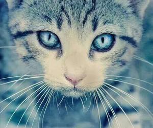 animal, beautyfull, and blue image