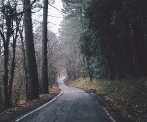 forest, road, and tree image