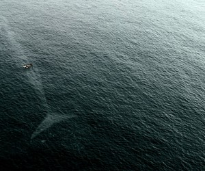 awesome, boat, and whale image