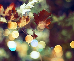 leaves, autumn, and bokeh image