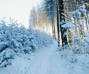 beautiful, winter, and forest image