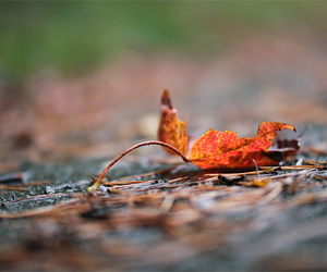 autumn, photo, and nature image