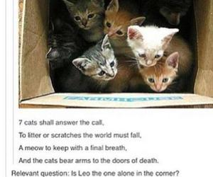 books, cats, and funny image