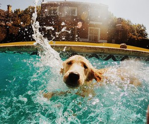 dog, pool, and summer image