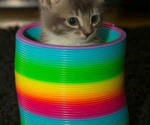 cats, colourful, and funny image