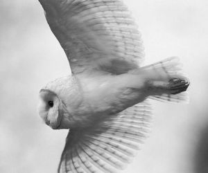 owl, white, and animal image