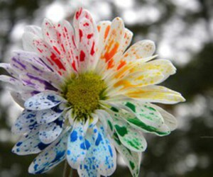 flowers, colors, and rainbow image