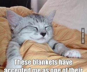 bed, blankets, and cat image
